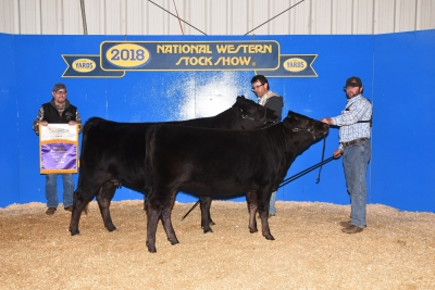 Grand Champion Cow-Calf - 2018 American Wagyu Association, National Western Stock Show