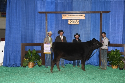 Reserve Grand Champion Full Blood Cow - 2018 North American International Livestock Exposition