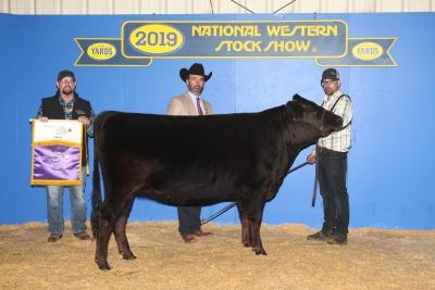 Grand Champion Black Fullblood Heifer
